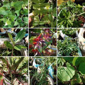 plantas-medicinales-la-casa-del-viento