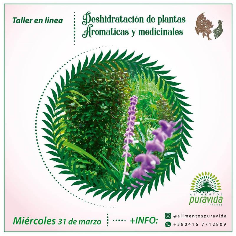Taller: Deshidratación de plantas aromáticas y medicinales.