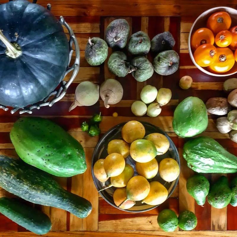 Taller: Manejo de vegetales - Galería3. La Casa del Viento
